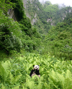Travel to China see Pandas