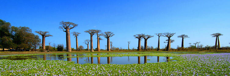 Tours to Madagascar