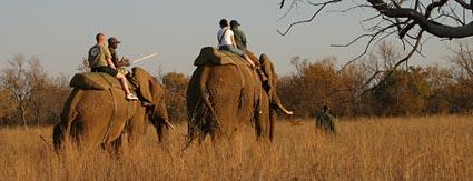Safaris with elephants