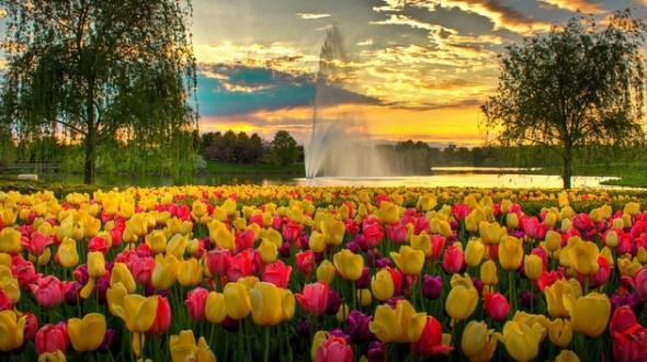 Flower Fests in spring